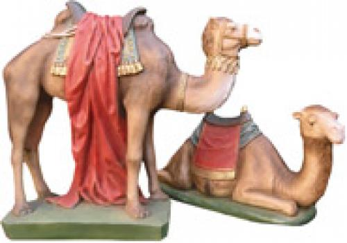 Kamel liegend